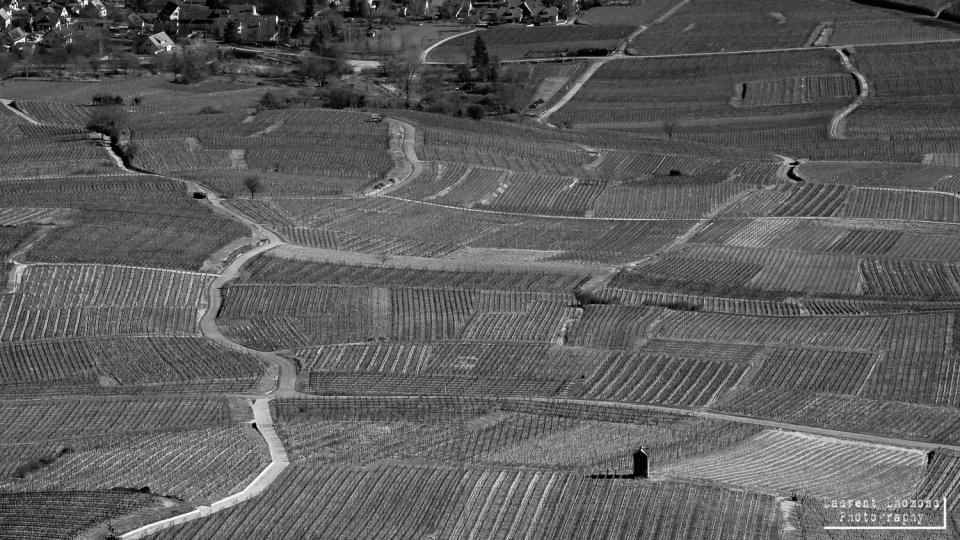 Route des vins, Alsace, France, Feb 2014